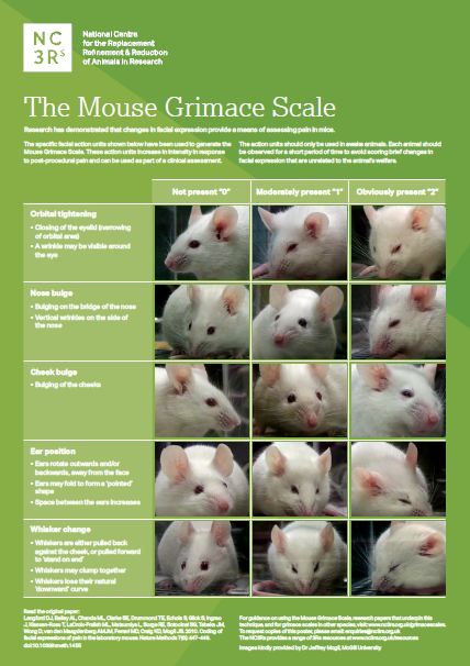 Image shows the Rat Grimace Scale poster, which includes five types of rat facial expression (orbital tightening, nose bulge, cheek bulge, ear position and whisper change) and images to show this feature not present, moderately present and definitely present.
